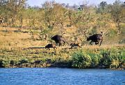 Battle at Kruger No. 4