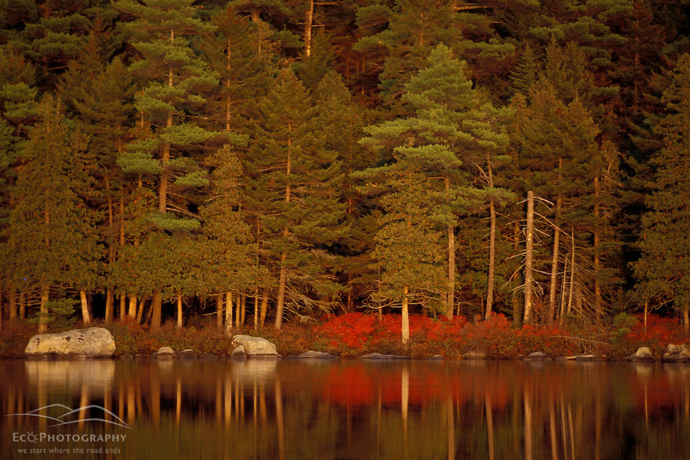 Baxter State Park, ME. Reflections in Daicey Pond.