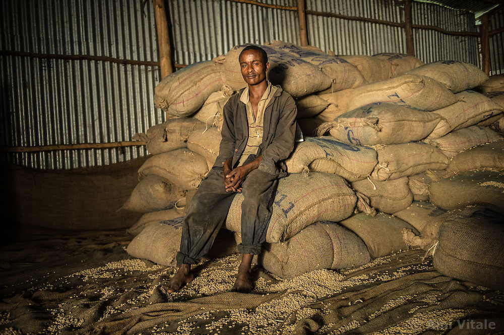 Tilahun Makonen loads cofee on trucks on the Teppi plantation in the Kaffa region of Ethiopia.