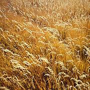 Fields, Colorado