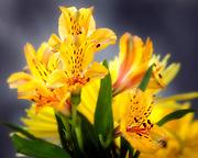 WA11658-00...WASHINGTON - Composite flower.