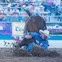 RENO , USA - JUNE 30 : Cowboy Participant in a Steer wrestling Competition at the Reno Rodeo  Professional Rodeo held in Reno Nevada , USA on June 30 2013