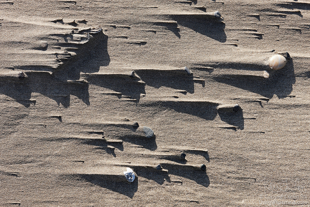 Rocks, shell fragments and other beach debris helps to illustrate the path of the wind at Bandon, Oregon. The wind, blowing from right to left in this image, is blocked by the obstacles. Sand piles up in the wake that develops behind each obstacle.