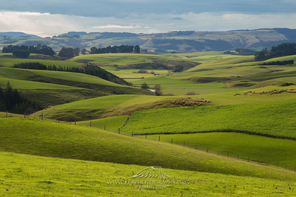 Green rolling hills in southland new zealand kea for Nz landscape