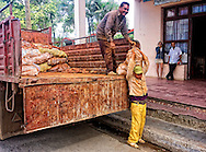 Men unloading potatoes in Moron, Ciego de Avila, Cuba.