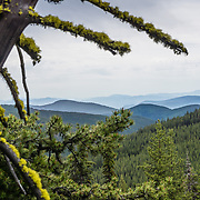 View eastwards from Copper Butte, Marcus Trail, Colville National Forest, Kettle Range, Washington, USA