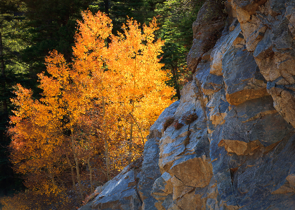 Fall color in the Taos Ski Valley.