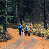 Clint and Chris Oster walking their dogs in fall. Yaak Valley, Montana.