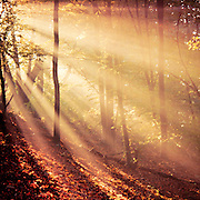 Autumnal morning light