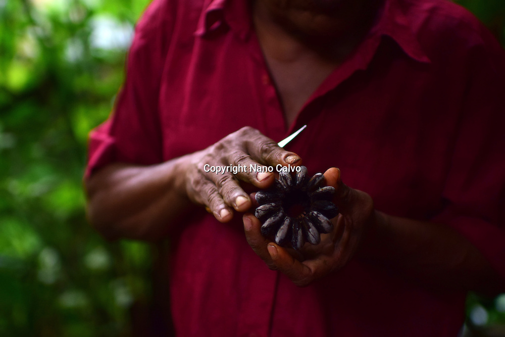 Catato L&oacute;pez, Bribri man, explaining different uses and properties of plants, trees and natural elements. <br />