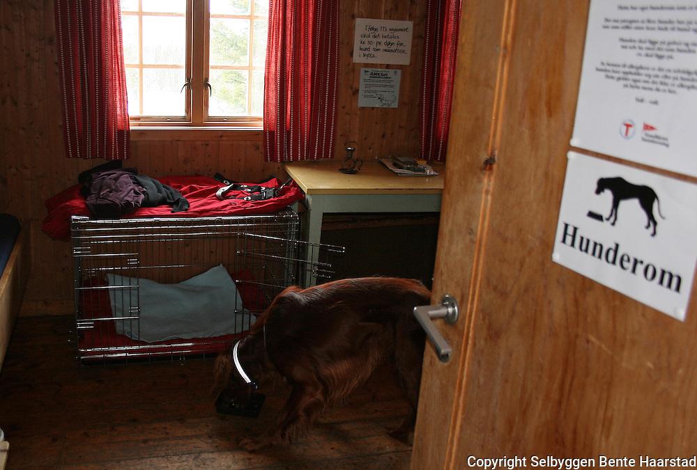 Schulzhytta blir selvbekjent om sommeren, ikke økonomi med betjening. Dugnad klargjør turisthytta med rundvask før sommersesongen. Hunderommet på Schulzhytta har egne soveplasser for gjester med hunder.