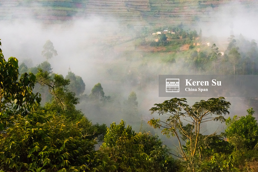 Forest in morning mist, home of gorillas, Bwindi Impenetrable National Park, Uganda