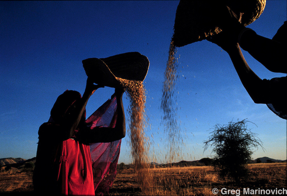 FARMING ERITREA NOV 1997: Eritrean peasant women use the dusk breeze to clean the chaff from sorghum near Tessenai in south western Eritrea, 1997.  (Photo by Greg Marinovich)
