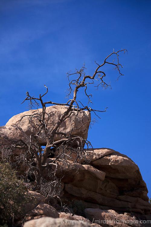 USA, California, Joshua Tree. Barker Dam Nature Trail.