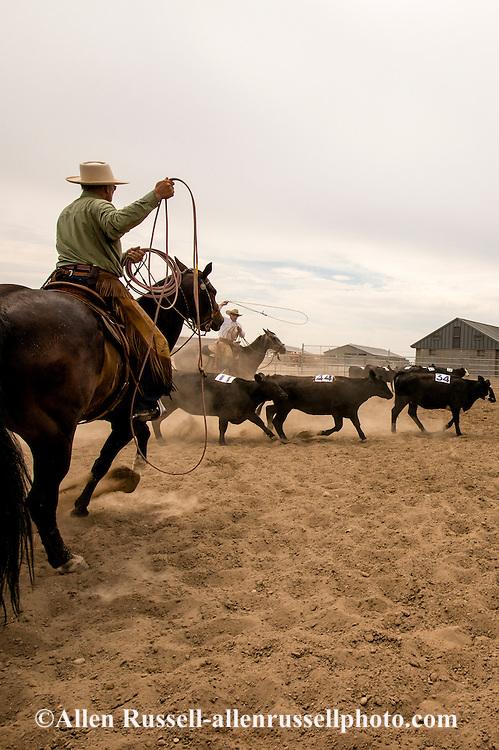 Will James Roundup, Ranch Rodeo, Cow Doctoring, Hardin, Montana, Buck Brannaman, Nate Wald
