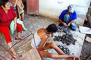 Cleaning oysters in Bariay, Holguin, Cuba.