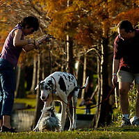 ORLANDO, FL -- January 30, 2008 -- Howard Forman and his Great Dane, Cyrano, greet Lori Horchler and her Yorkie, Angelo, as they walk the .9 mi perimeter of Lake Eola Park in Orlando, Fla., on Saturday, January 30, 2006.  The popular park was developed during the citrus industry boom in the 19th century and offers a tranquil haven set against the city's downtown to paddle around the floating fountain or jog the lake's perimeter.