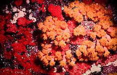 Submarinas / Underwater Photography
