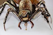 Insects by Jairo Salomon in Holguin, Cuba.