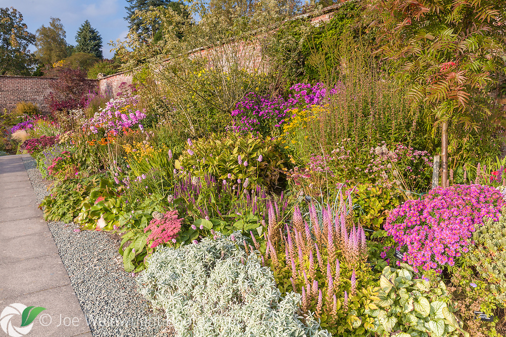 Colouful herbaceous borders in the Walled Garden at Holehird Gardens, Cumbria, photographed in October. Planting includes Phlox, Lobelia, Sedum, Persicaria, Astrantia and Lythrum