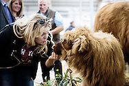 Royal Highland Show 2015, Royal Highland Centre, Ingliston, Edinburgh.<br /> Thursday 18th June, 2015.<br /> <br /> COPYRIGHT CRAIG STEPHEN 2015. PAYMENT TO CRAIG STEPHEN, 45 VICTORIA STREET, PERTH, PH2 8LY. <br /> <br /> Tel: 07905 483532.<br /> info@craig-stephen.co.uk