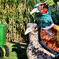 Pheasants and Deere Tractor at Storybook Land in Aberdeen, South Dakota<br /> Storybook Land in Aberdeen, South Dakota recreates almost every nursery rhyme you remember as a kid. You will enjoy seeing 65 figures such as Jack n&rsquo; Jill, Humpty Dumpty and Goldilocks. Also in the 210 acres at Wylie Park is a step-by-step trail that tells the Wizard of Oz story. Best of all, admission is free. Come follow the yellow brick road.