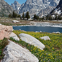 WY00622-00...WYOMING - Glacier lilys and Lake Solitude in Grand Teton National Park.
