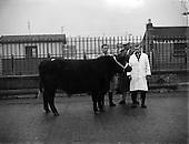 1958 – 09/12 Dublin Fat Stock Show and Sale.