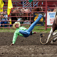 A rider is thrown from his hourse and prepares to hit the dirt during the 2009 Roy Rodeo