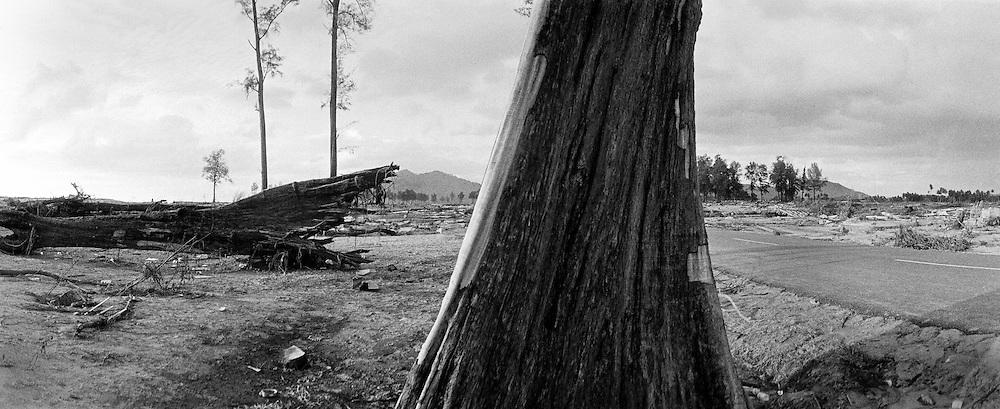 After the earthquake and the Tsunami in LHOKNGA,  west of Banda Aceh. The city is completly destroyed. Some trees survied the big wave. .Nach dem schweren Erdbeben  und dem Tsunami in LHOKNGA. Die Stadt ist ausgeloest. Einige Baeume ueberlebten die grosse Welle andere wurden wie Streichhoelzer umgenickt....<br /> <br /> Murat Tueremis<br /> Germany<br /> +49-171-5437080<br /> email: murattueremis@t-online.de.