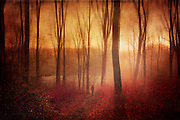 Dreamy forest scene on a sunny winter day