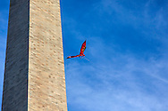 Washington Monument,  photography, photographer, Washington D.C., Art, Fine Art, SVA, color, dragon, kite, monuments Washington D.C., Monuments, Statues, Composite, Memorials, Fine Art,