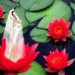 Fairy Princess inside a red water lily.