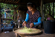 Siri separates green (or early) Rice by hand in Nakhon Nayok, Thailand.