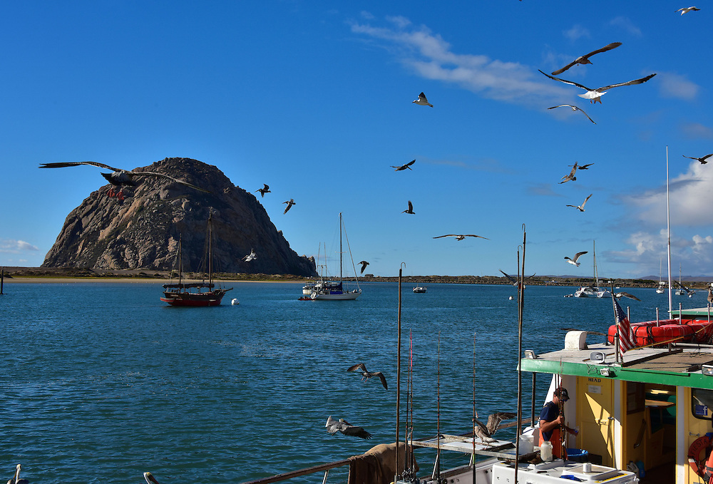 Flock of birds around fishing boat in morro bay for Morro bay fishing