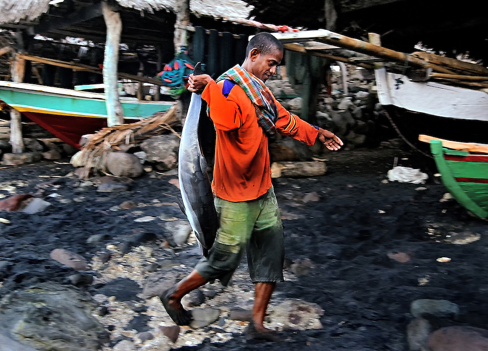 A fisherman takes home a baby dolphin on Lembata Island, Indonesia.