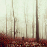 Misty winter forest
