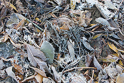 Frost covers autumn leaves that have fallen to create ground cover