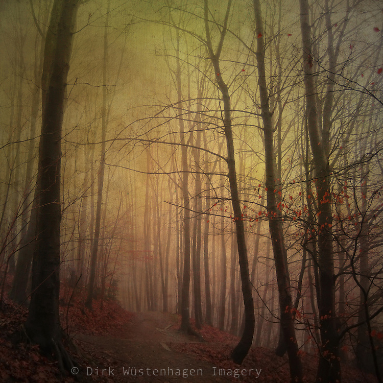 Forest path in mid winter on a dull and misty afternoon.<br />