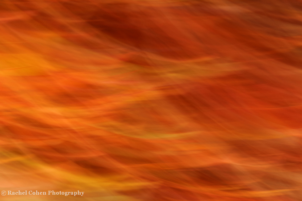 &quot;Warmth of the Flame&quot; <br /> <br /> Enjoy the warmth of this beautiful flaming autumn abstract!