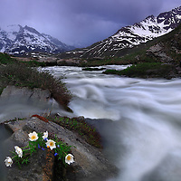 The roaring rapids of the river Arc in the upper part of the Val Cenis in the french Western Alps, Haute Maurienne. A classic mid springtime scene, roaring waters produced by the snow meltdown, and wildflowers.