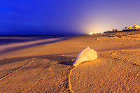 Whelk shell on the beach, lit by the parking lot lights at Avalon pier at twilight.