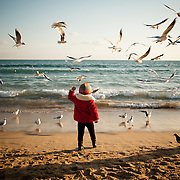 Seagulls flock as a child throws food to them on Haeundae Beach, Busan, South Korea, December 31, 2012.