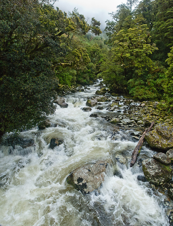 The gushing waters of Poseidon Creek just before they join the Arthur River near Lake Brown; Milford Trail, New Zealand