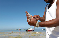Cleaning fish in the surf at Bamburi Beach in Mombasa, Kenya on Saturday, May 20, 2006.