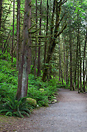 The Second Canyon Trail winds through the rainforest at Capilano River Regional Park in North Vancouver, British Columbia, Canada.