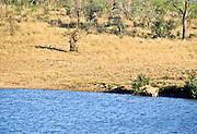 Battle at Kruger No. 7