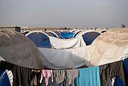 Iraq: View of Debaga camp some 40 Km from Erbil. Alessio Romenzi