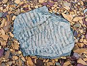 """Billion-year-old seabed ripples are fossilized in a blue rock pattern on broken yellow and purple rocks above Logan Pass, in Glacier National Park, Montana, USA. Published in """"Light Travel: Photography on the Go"""" book by Tom Dempsey 2009, 2010. Rocks in the park are primarily sedimentary layers deposited in shallow seas over 1.6 billion to 800 million years ago. During the tectonic formation of the Rocky Mountains 170 million years ago, the Lewis Overthrust displaced these old rocks over newer Cretaceous age rocks. Since 1932, Canada and USA have shared Waterton-Glacier International Peace Park, which UNESCO declared a World Heritage Site (1995) containing two Biosphere Reserves (1976)."""