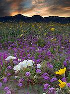 Anza Borrego Desert State Park Photos